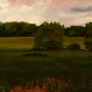 Braun's Farm – Early Corn